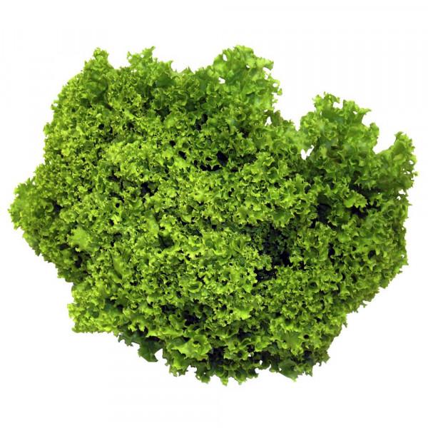 Lollo Bianco Salat