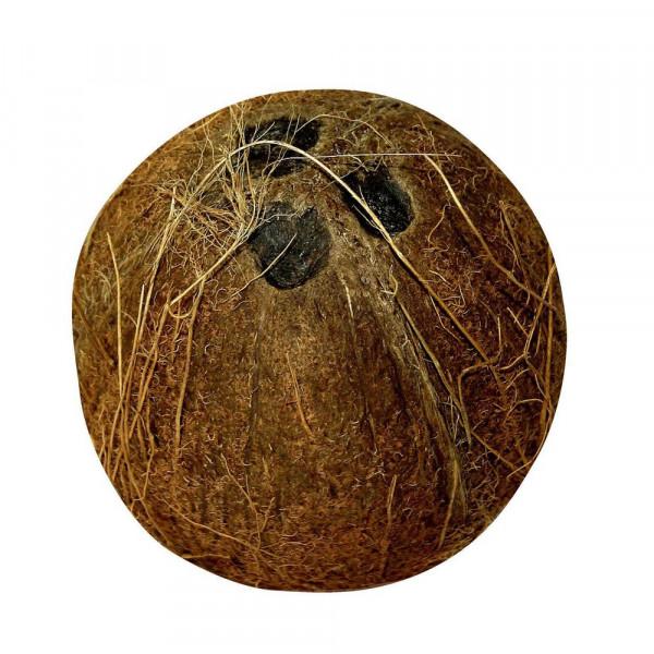 Bio Kokosnuss