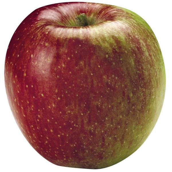 """Apfel """"Braeburn"""", lose"""