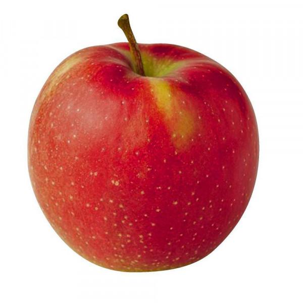 "Apfel ""Jonagold"", lose extra groß"
