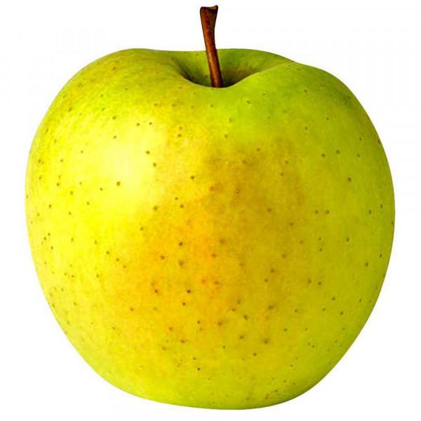 """Apfel """"Golden Delicious"""", lose"""
