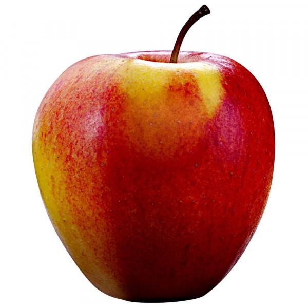 Apfel Pinova, lose