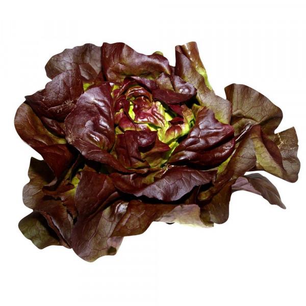 Kopfsalat, rot