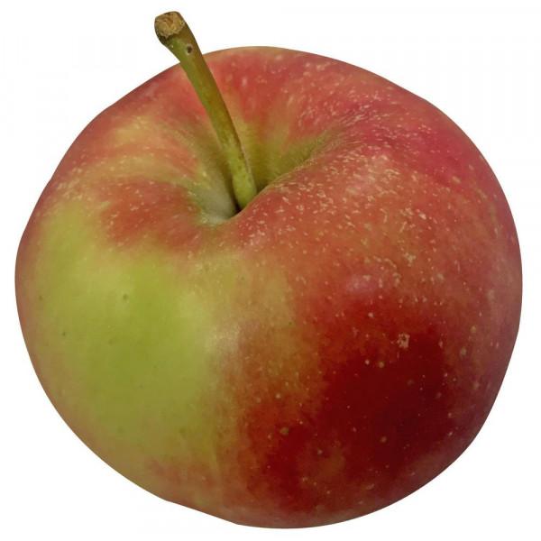 "Apfel ""Elstar"", lose"