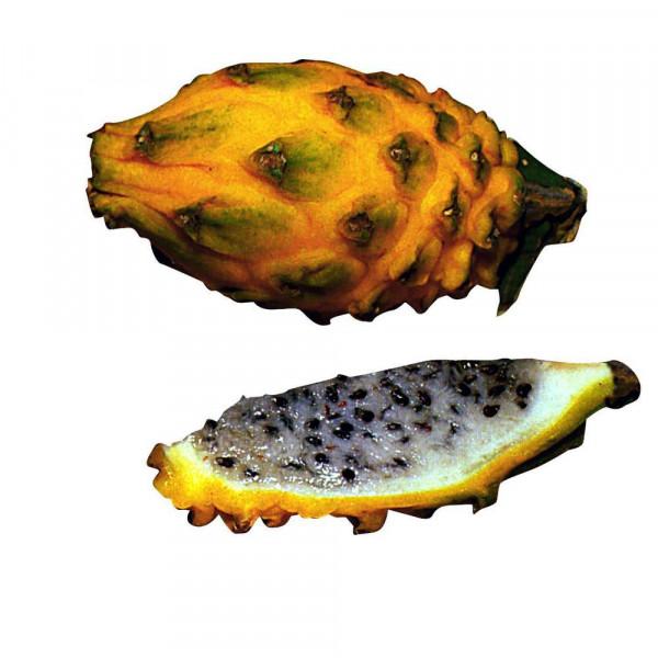 Drachenfrucht, gelb